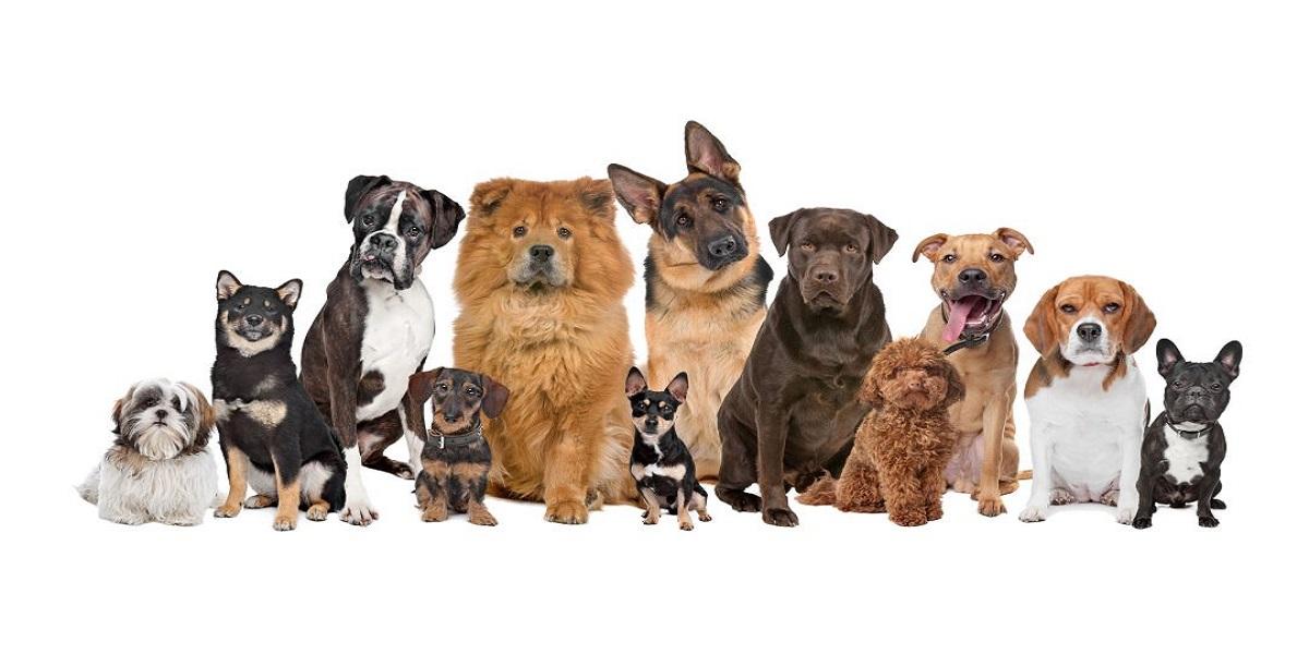 نژاد های سگ