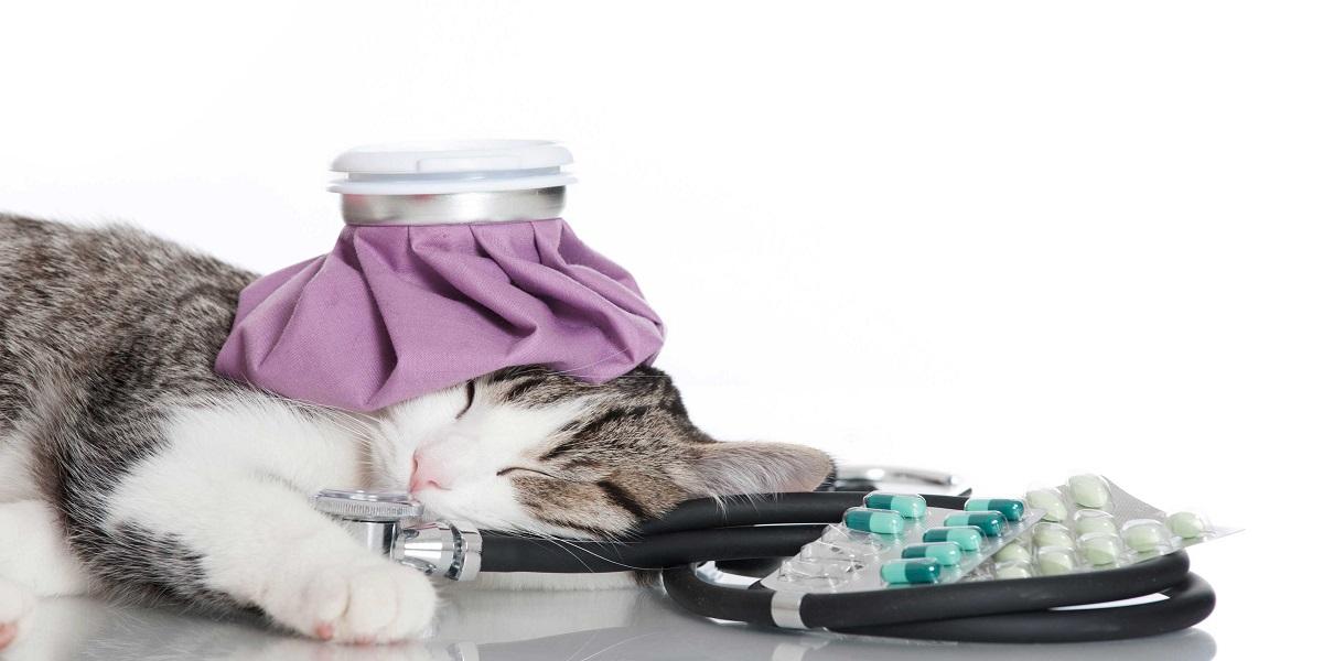 سرماخوردگی گربه