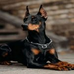 بهترین سگ های نگهبان